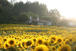Casa de Mónica Fernández-Aceytuno en la Naturaleza
