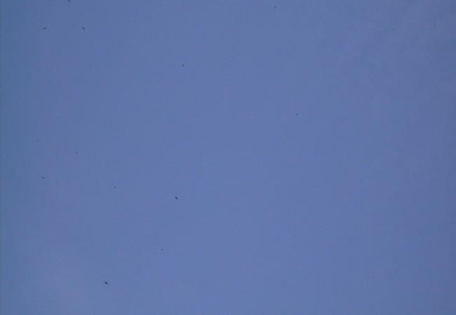 """11:03  Esta fotografía de hoy de portada, vale un mundo. Y en """"leer más"""" se puede ampliar la imagen y comprobar que esos diminutos puntos negros sobre el cielo azul, son los primeros vencejos que acaban de llegar a Madrid, fotografíados por un lector"""