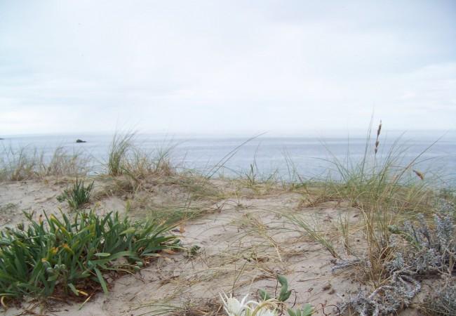 """9:54   Esa flor blanca que se ve cuando se pincha en """"leer más"""" y luego sobre la fotografía, se llama azucena de mar, y cebolla de las gaviotas toda la planta, cuyas semillas navegan por el mar millas y millas…"""