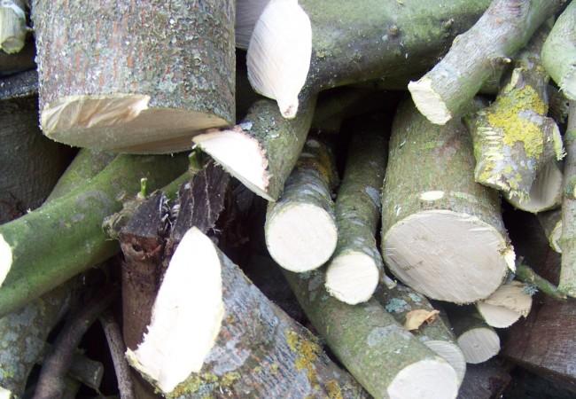 Una rama de arce empezó a crecer sobre el tejado y hubo que cortarla el pasado viernes. Nunca antes se había cortado un arce en mi casa, por lo que me llamó la atención lo blanca que es su madera y lo bien que…