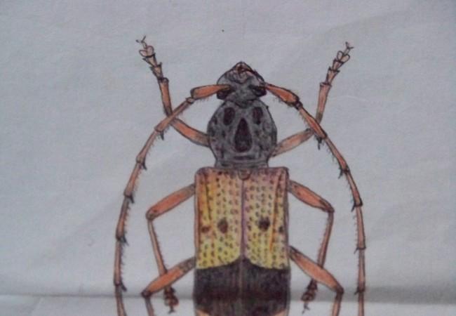 Martes, 7 de Octubre de 2008…Esta es la primera ilustración de la Naturaleza que recibimos y cuyo autor es el entomólogo y fenólogo Antonio Morcuende Bachiller…