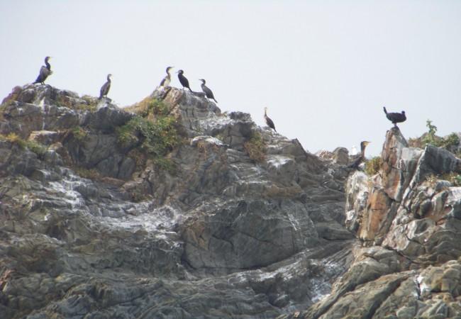 9:45  Colonia de cormoranes donde los más jóvenes, son los más claros.