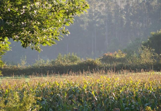 9 y 39 del Jueves 23 de Octubre de 2008  Esta es la luz que tenían hace cinco minutos los maizales que aún, afortunadamente, no han venido a segar.