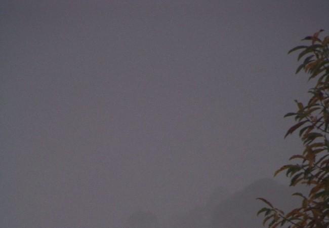 10:41  Ha amanecido un día neblinoso, y los eucaliptos se ven al fondo, como fantasmas entre la niebla, como si saliera humo blanco de sus copas, con las hojas del castaño ocres a punto de caer, cayendo en este instante.