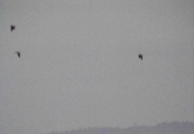 8:54 del Martes 16 de Diciembre de 2008  Está amaneciendo ahora mismo, a las 8:54, con un cielo despejado y una niebla muy densa por el fondo del valle por donde discurre el río, con más agua que otros inviernos.