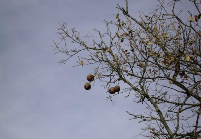10:40 del Miércoles 24 de Diciembre de 2008  Sólo cuando me trajeron los Reyes los patines, recuerdo haber tenido más ilusión que ahora, que puedo grabar a los árboles con sus pájaros,la helada de esta mañana, o el paso del río.