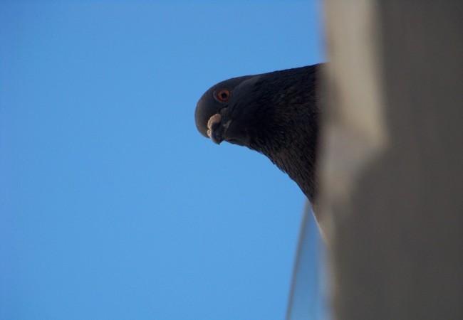 9:41 del Martes 20 de Enero de 2009  Buenos días desde Valencia. Hace un día maravilloso y el cielo está por aquí lleno de aves: he visto gaviotas, grandes bandadas de estorninos e incluso una cotorra pasar volando.