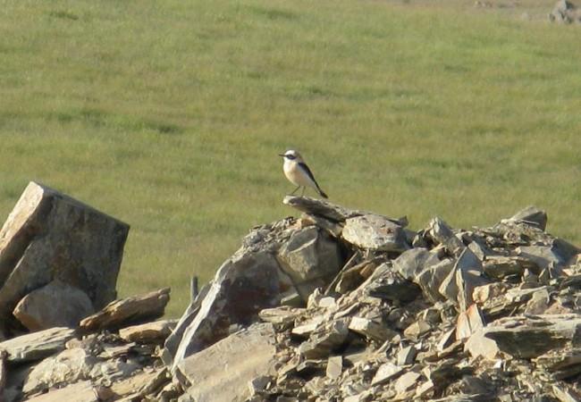 9:02  Querida Mónica: el día de ayer fue una sorpresa encontrarme con dos especies de aves que vienen en primavera desde África, donde han pasado el invierno.