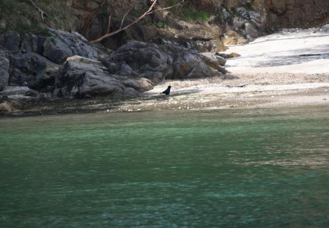 Cuervos por la playa