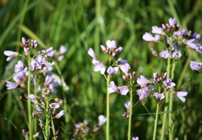 10:52   Acabo de llegar de hacer, al fin, la foto al berro de los prados florecido y todo el camino tenía una luz clara llena de insectos volanderos, nuevos como el día.