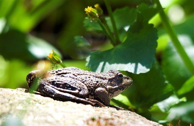 """18:03  Carta y foto de Karin F.:  """"Han empezado a croar las ranas en el estanque de mi jardín. No cabe duda: llegó el buen tiempo."""""""