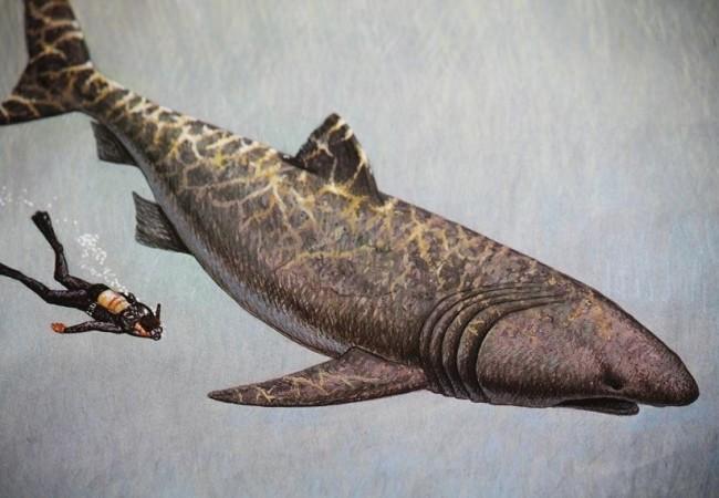 11:08  La piel de un tiburón no es lisa. Está llena de dientes que muerden el mar y rompen las redes. Redes que se echan hoy a la gamba o a la cigala en el golfo de León.
