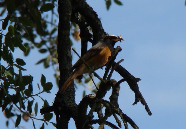 """10:03   Con otra palabra para nuestro Diccionario de la Naturaleza: BUZARCO, nueva crónica de Juan Carlos Delgado Expósito:""""No sabría decir cual es mi pájaro preferido, por todos los que he"""