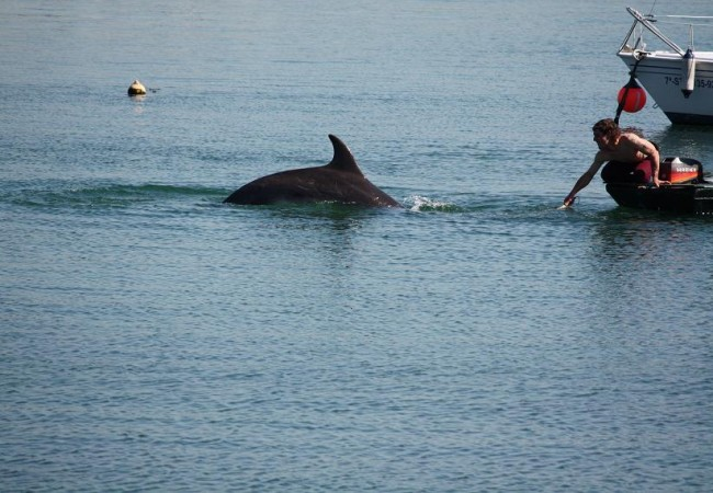 9:54  En junio es cuando se llena la ría de delfines que entran a pescar los bancos de caballas, a las que rodean en familias, y desconciertan removiendo el agua, dando saltos de casi un metro de altura.