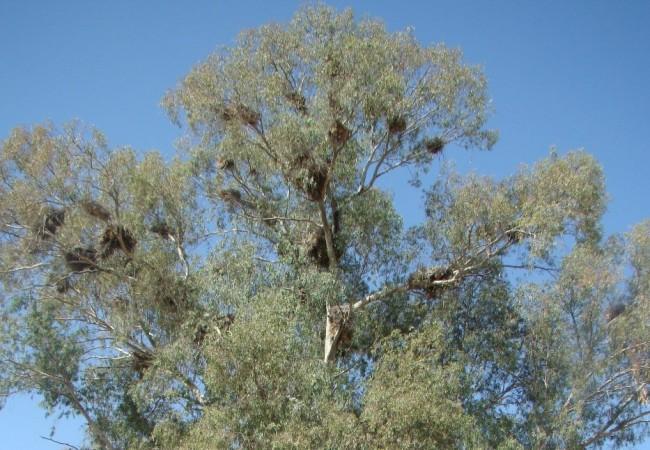 A estas alturas del verano los nidos de las cigüeñas blancas y las garzas reales, se encuentran vacíos.
