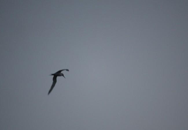 Se sabe que es la hora de ir guardando los aparejos, cuando los charranes y las gaviotas pasan volando, hacia el Oeste por encima del barco.