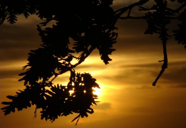 Mientras saboreo los higos, llama mi atención un grupo de ciervos que se escabullen entre las sombras de pinos, quejigos, encinas y helechos, quizás estén ya barruntándose la berrea.  Crónica de Juan Carlos Delgado Expósito