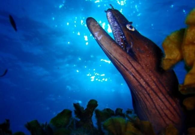 """Como su especie indica en latin, es una """"Augusta"""" de las inmersiones, todos siempre comentan que han visto una morena, pero mira que morena mas grande, etc…"""