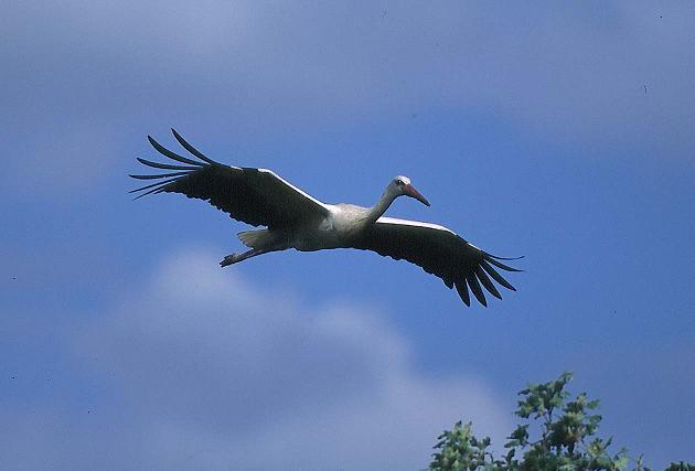 SEO/BirdLife celebra el Día Mundial de las Aves el 3 y 4 de octubre