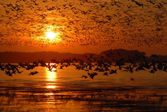 """Beltrán Ceballos ha obtenido en la categoría """"Aves de zonas húmedas del mundo"""" el premio FOTOAVES 2009."""