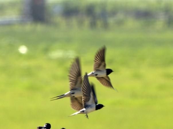 Al ver esta preciosísima fotografía realizada el sábado pasado en la laguna de la Janda, en Zahara de los Atunes, por Cristóbal García Meléndez, me pareció que las aves que están posadas en la alambrada