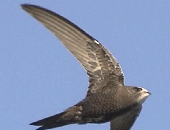 Buenos días usuarios de la página web de ACEYTUNO, soy un ornitólogo valenciano y os transmitiré mis noticias de ornitología de la ciudad siempre que pueda y hayan.