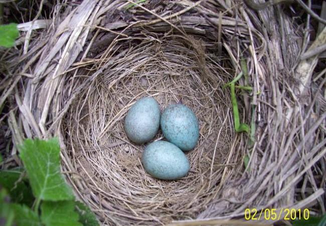 """Ramón llamó a la puerta de casa. """"¿No me dijiste el año pasado que te avisara si encontraba algún nido?"""""""