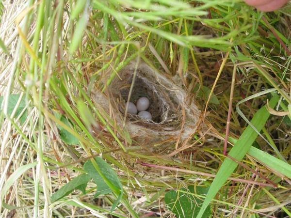 Aquí se ve el nido de buitrón un poco mejor y se aprecian los materiales con los que está hecho