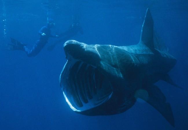 Acabo de hablar por teléfono con Aitor Lekuona, biólogo del Colegio Oficial de Biólogos de Euskadi, y me ha estado contando su encuentro con el tiburón peregrino que hace unos días avistaron entre