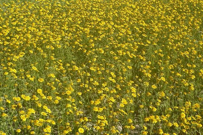 La progresiva sustitución del laboreo mecánico por el químico está provocando múltiples inversiones de flora como consecuencia del mal uso de los herbicidas