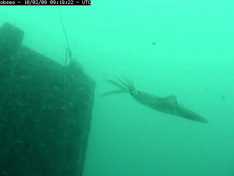 13:14Desde hace unos minutos, podemos desde aquí observar ahora mismo en directo el Mediterráneo a veinte metros de profundidad pinchando en