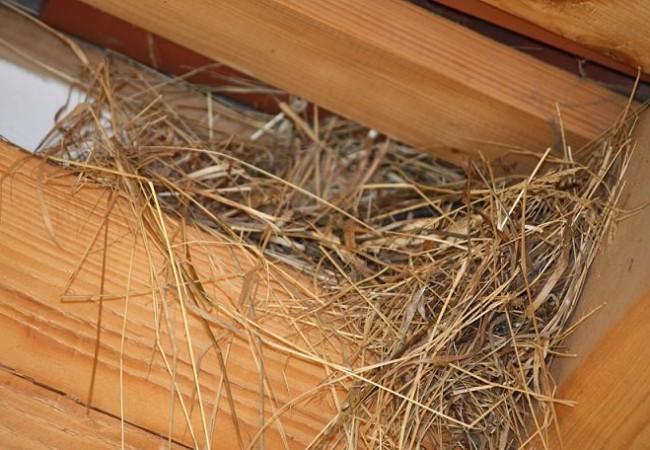 Quedamos en que sacaríamos fotos de nidos solo si estaban hechas de lejos y yo vengo observando en