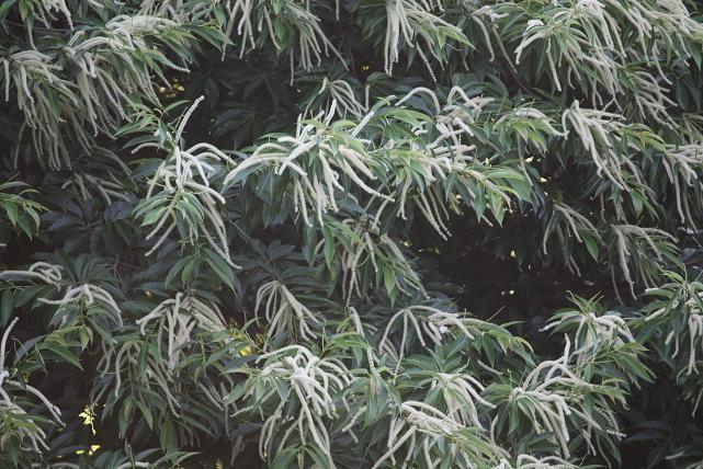 Hay rayos que se quedan a dormir dentro de los árboles