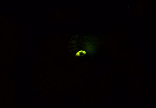 Lo que más me llama la atención de las luciérnagas,