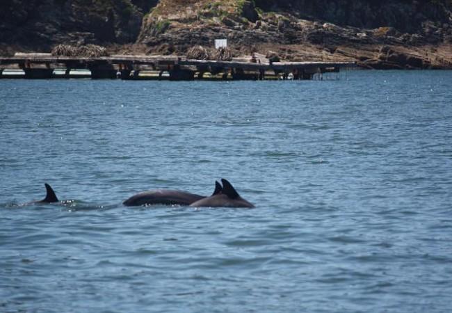 A eso de las dos y media de la tarde, empezamos a ver delfines, muy cerca de la costa y de las bateas de