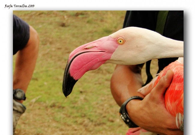 Desde Albacete, el ornitólogo Rafa Torralba nos cuenta