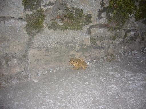 Buenas noches Monica; Esta es la ultima foto que saque, esta hecha en un pueblo de Burgos, RÍo de Losa, se llama.