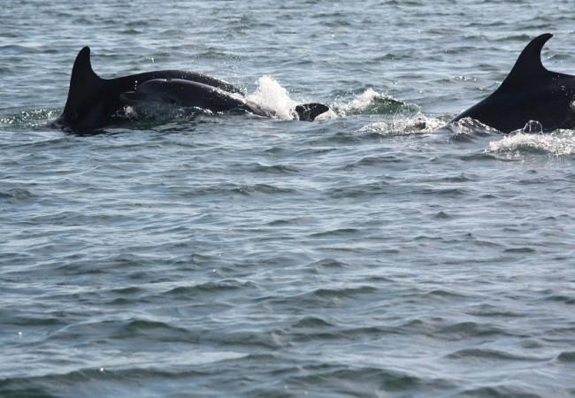 Acabo de ver estos delfines en la entrada del puerto, la cría, nadando tan al unísono con su madre, que parecían