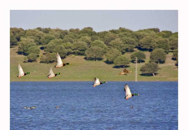 Esta imagen va dedicada a una persona que en estos momentos, está escondido a pie de lago
