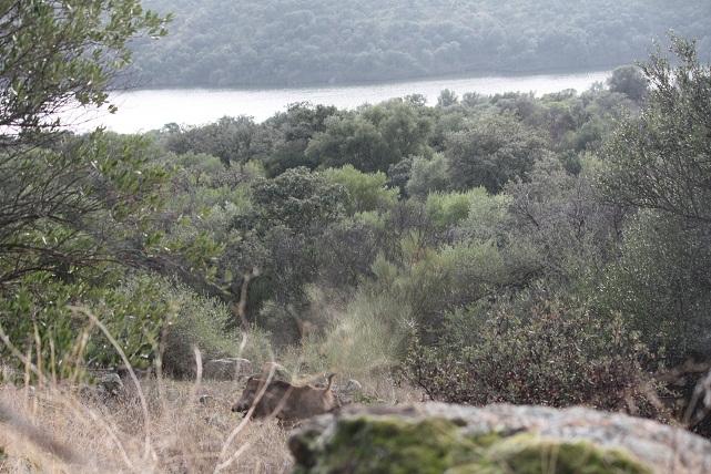 ¿Cuántas especies animales viven en España?
