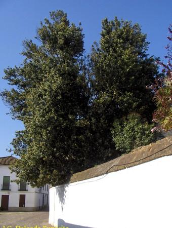 Húmedo está, bajo el laurel, el banco de verdinosa piedra.                  A .Machado