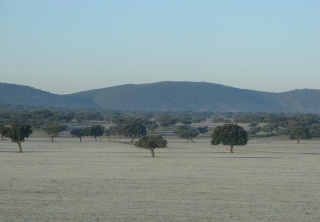 El paisaje que veo todas las mañanas desde el coche es blanco y verde, blanco el pastizal y verde el encinar.