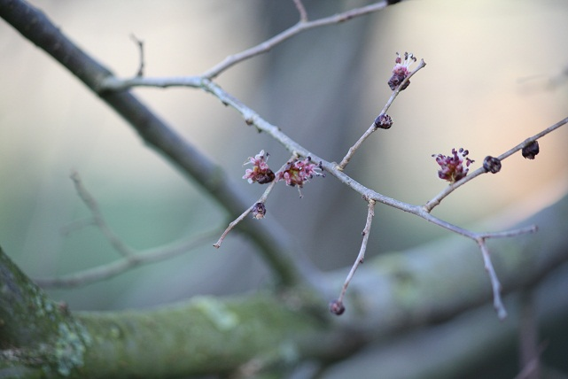 La fotografía, de una rama florecida de olmo, en este preciso instante, 17:44 de la tarde, es