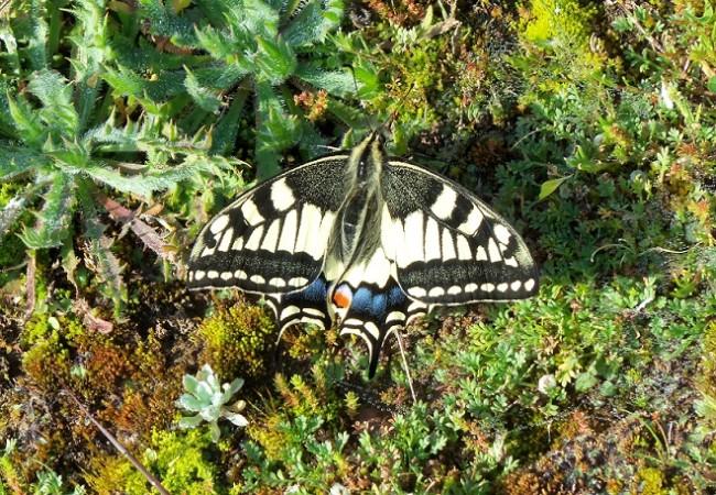 Querida Mónica:   Esta mañana, bajando por la ladera sur del viejo castillo almohade del Toleíllo, en Peñaflor, ví volar una preciosa mariposa.