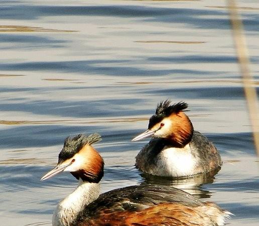 Esta mañana me fui hacia la Laguna de los Patos, en Hellín.    Rafa Torralba