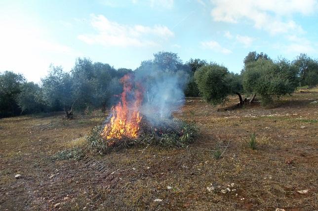 A pesar de todo el cuidado que se ponga, un repentino e inesperado cambio en la dirección del viento puede tostar los olivos.  Joaquín