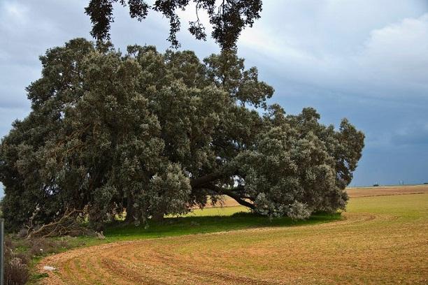 Esta zona cuyo principal cultivo es el cereal de secano, es área muy importante para las aves esteparias.  Julia