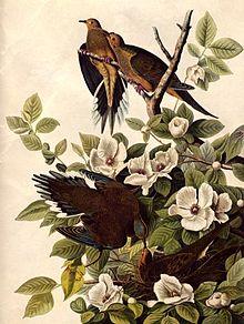 """""""El verdadero conservacionista es el que sabe que el mundo no es una herencia de sus padres sino un préstamo de sus hijos""""                          J.J. Audubon"""