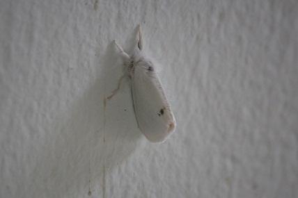 Blanca como un armiño