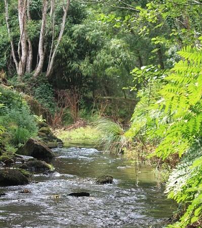 Si hay algo que debería hacernos llorar hasta llenar un mar, es el estado de nuestros ríos.   Mónica Fernández-Aceytuno